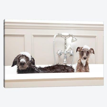 Two Funny Wet Dogs In Bathtub Canvas Print #SMZ165} by Susan Schmitz Canvas Art
