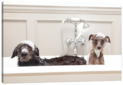 Two Funny Wet Dogs In Bathtub Canvas Art Print