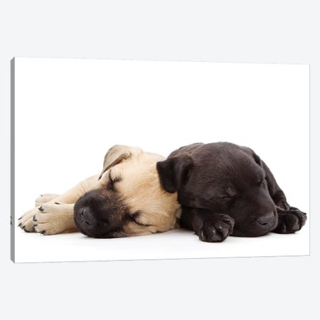 Two Puppies Sleeping Together Canvas Print #SMZ166} by Susan Schmitz Canvas Artwork
