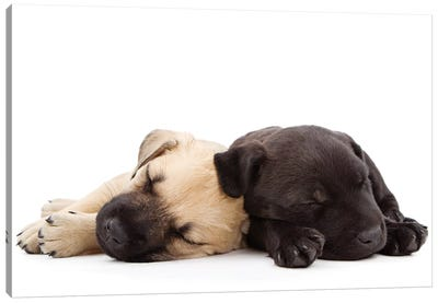 Two Puppies Sleeping Together Canvas Art Print