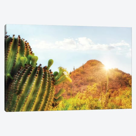 Arizona Desert Scene With Mountain And Cactus Canvas Print #SMZ16} by Susan Schmitz Canvas Art