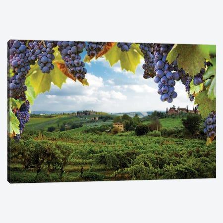 Vineyards In San Gimignano Italy Canvas Print #SMZ171} by Susan Schmitz Canvas Artwork