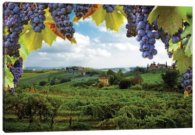 Vineyards In San Gimignano Italy Canvas Art Print