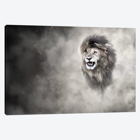 Vulnerable African Lion In The Dust Canvas Print #SMZ174} by Susan Schmitz Art Print