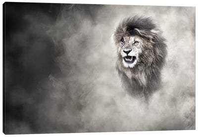 Vulnerable African Lion In The Dust Canvas Art Print
