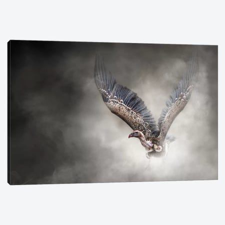 White-Backed Vulture In The Dust Canvas Print #SMZ177} by Susan Schmitz Art Print