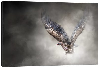 White-Backed Vulture In The Dust Canvas Art Print