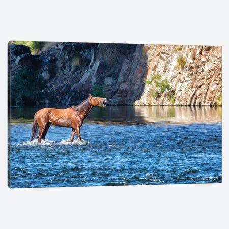 Wild Horse Neighing While In River Canvas Print #SMZ178} by Susan Schmitz Canvas Art