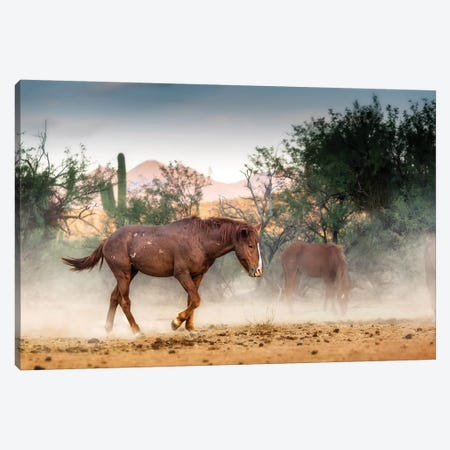 Wild Horse Running In Arizona Desert Canvas Print #SMZ179} by Susan Schmitz Canvas Wall Art