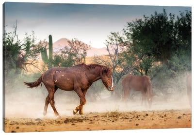 Wild Horse Running In Arizona Desert Canvas Art Print