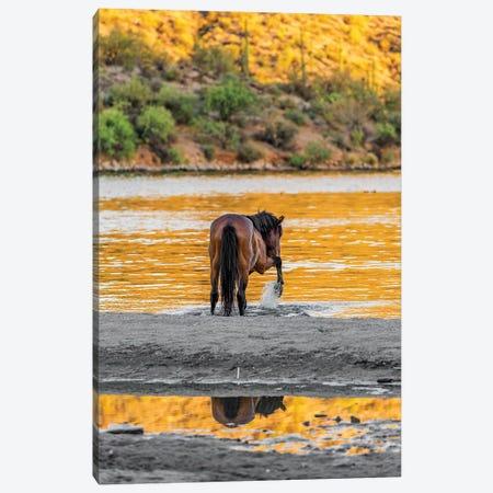 Arizona Wild Horse Playing In Water Canvas Print #SMZ17} by Susan Schmitz Canvas Wall Art