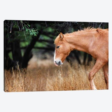 Wild Horse With Grass In Mouth Canvas Print #SMZ180} by Susan Schmitz Canvas Art Print