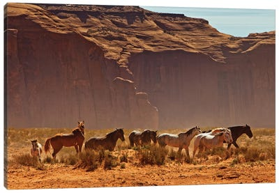 Wild Horses In Southern Utah Canvas Art Print