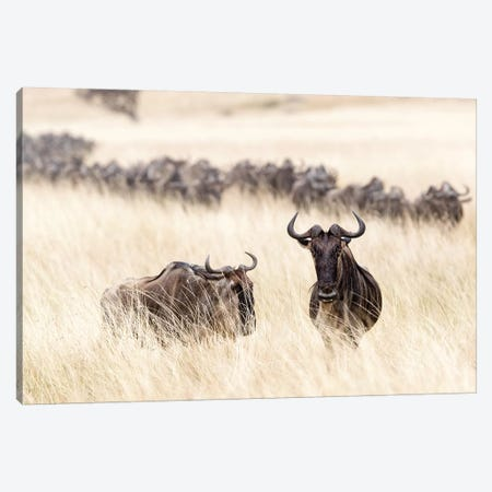 Wildebesst In Tall Grass Field In Kenya Canvas Print #SMZ185} by Susan Schmitz Canvas Art