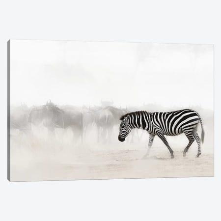 Zebra In Dust Of Africa III Canvas Print #SMZ189} by Susan Schmitz Art Print
