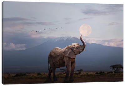 Elephant Holding Up Moon In Africa Canvas Art Print