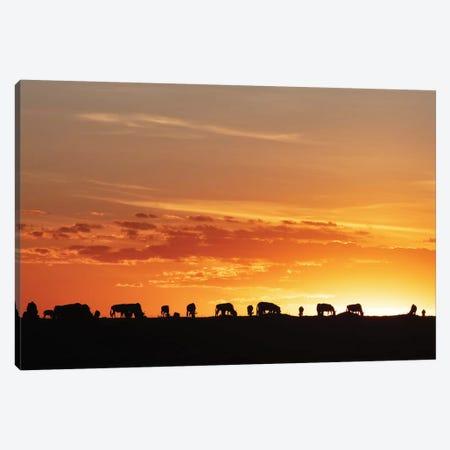 Sunset Silhouette Of Wildebeest In Africa Canvas Print #SMZ197} by Susan Schmitz Art Print