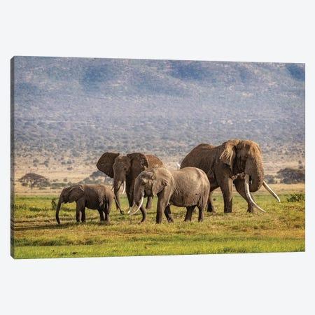 Elephant Family In Amboseli Kenya Canvas Print #SMZ198} by Susan Schmitz Canvas Art