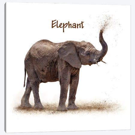 Baby Elephant Calf Blowing Dirt On White Canvas Print #SMZ200} by Susan Schmitz Canvas Art