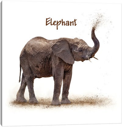 Baby Elephant Calf Blowing Dirt On White Canvas Art Print