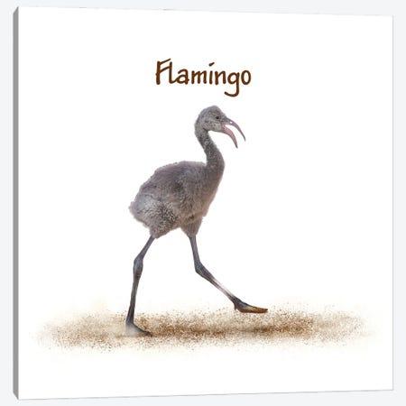 Baby Flamingo Walking On White Canvas Print #SMZ201} by Susan Schmitz Canvas Art