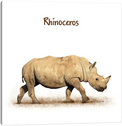 Young Rhinoceros Calf Walking Side On White Canvas Art Print
