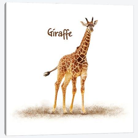 Cute Baby Giraffe On White Canvas Print #SMZ205} by Susan Schmitz Canvas Art Print