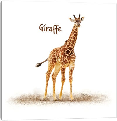 Cute Baby Giraffe On White Canvas Art Print