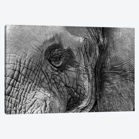 Closeup Elephant Eye - Black And White Canvas Print #SMZ208} by Susan Schmitz Canvas Art