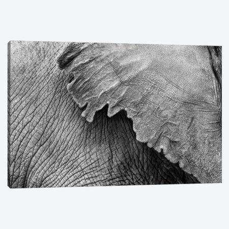Elephant Ear And Texture - Black And White Canvas Print #SMZ209} by Susan Schmitz Canvas Art