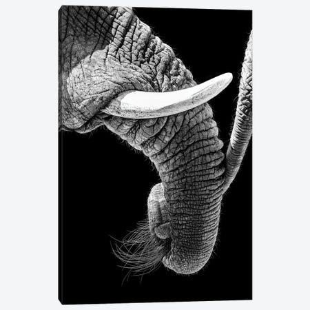 African Elephant Family Bonding Canvas Print #SMZ211} by Susan Schmitz Canvas Print