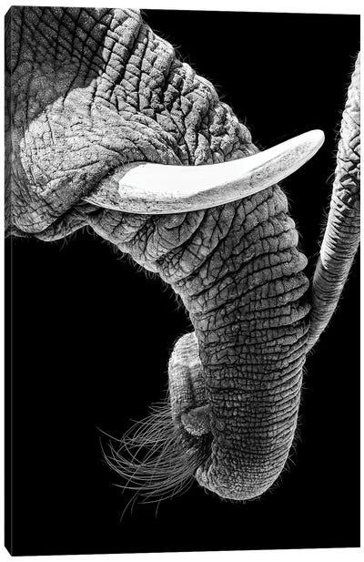 African Elephant Family Bonding Canvas Art Print