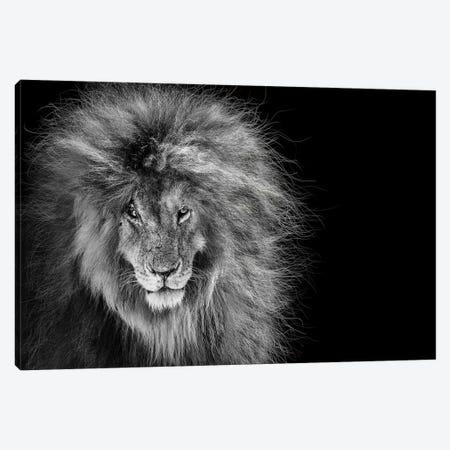 Scar The African Lion Legend Canvas Print #SMZ215} by Susan Schmitz Canvas Art
