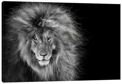 Scar The African Lion Legend Canvas Art Print
