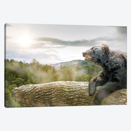 Bear In Tree At Smoky Mountains Park Canvas Print #SMZ21} by Susan Schmitz Canvas Art