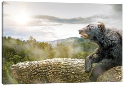 Bear In Tree At Smoky Mountains Park Canvas Art Print