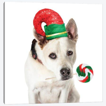 Christmas Dog Elf Holding Candy Cane Lollipop Canvas Print #SMZ226} by Susan Schmitz Canvas Print