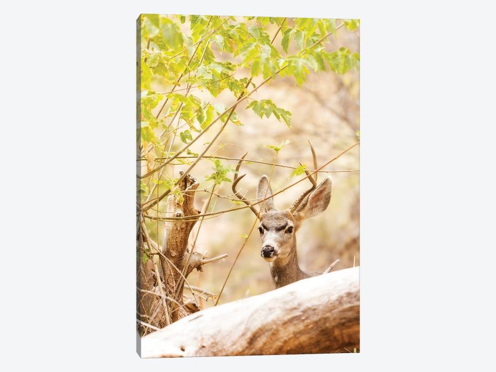 Beautiful Male Mule Deer In Woods by Susan Schmitz 1-piece Canvas Print