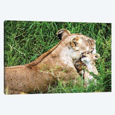 Affectionate Lioness With Playful Baby Cubs Canvas Print #SMZ2} by Susan Schmitz Canvas Art