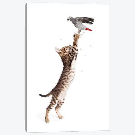 Cat Catching Bird In Flight Canvas Print #SMZ34} by Susan Schmitz Canvas Art
