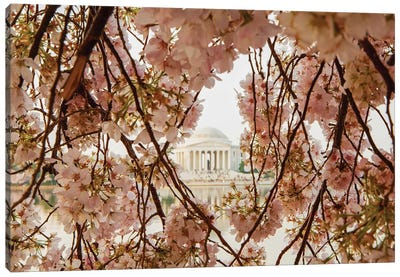 Cherry Blossom Flowers In Washington Dc Canvas Art Print