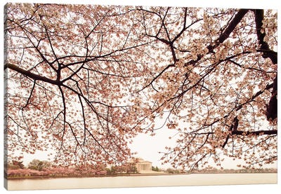 Cherry Blossom Trees And The Jefferson Memorial Canvas Art Print