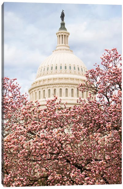 Cherry Blossoms At The Capitol Building Canvas Art Print