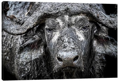 Closeup Muddy Cape Buffalo II Canvas Art Print