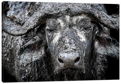 Closeup Muddy Cape Buffalo II Canvas Art Print