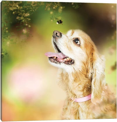 Cocker Spaniel Dog With Bee In Flowers Canvas Art Print