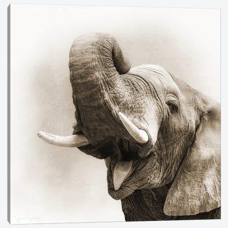 African Elephant Closeup Square Sepia 3-Piece Canvas #SMZ4} by Susan Schmitz Canvas Print