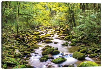 Creek Running Through Roaring Fork In Smoky Mountains Canvas Art Print