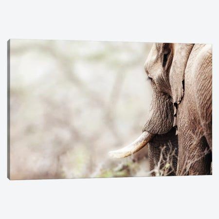 Cropped Photo Of Elephant With Copy Space Canvas Print #SMZ55} by Susan Schmitz Canvas Artwork