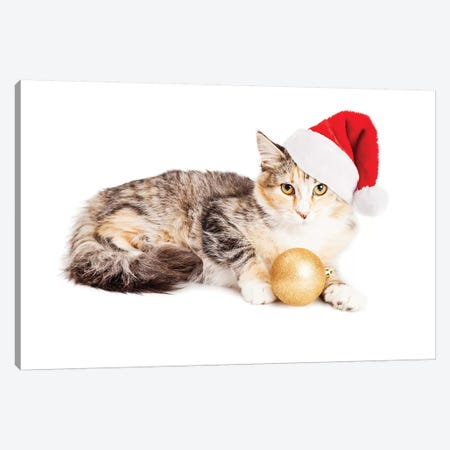 Cute Christmas Calico Kitten Canvas Print #SMZ59} by Susan Schmitz Canvas Art Print